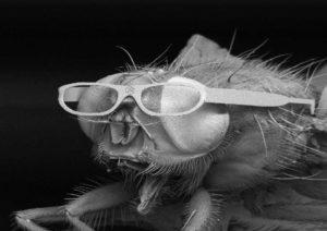 Ein Beispiel guter Bild-PR: Die Fliegenbrille treibt es auf die Spitze: Es ist sogar noch ein Logo in der Mitte der Brille eingraviert.