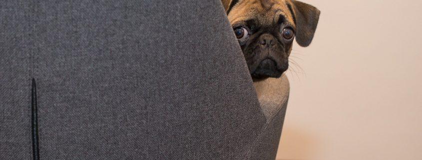 Arbeit im Home Office - Herrchen ist mit den Nerven am Ende?